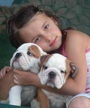 Lovely English Bulldog Puppies For Rehoming
